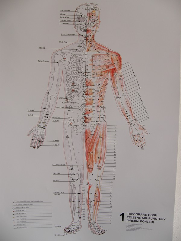 Mapa Topografie Bodu Tel Akupunktury Radomir Ruzicka Nastene